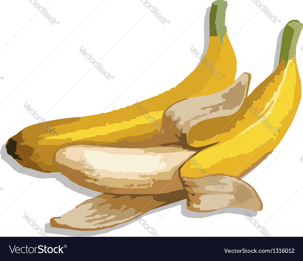 The bananas vector | Price: 1 Credit (USD $1)
