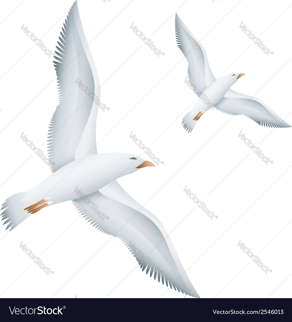 Flying seagulls birds vector | Price: 1 Credit (USD $1)
