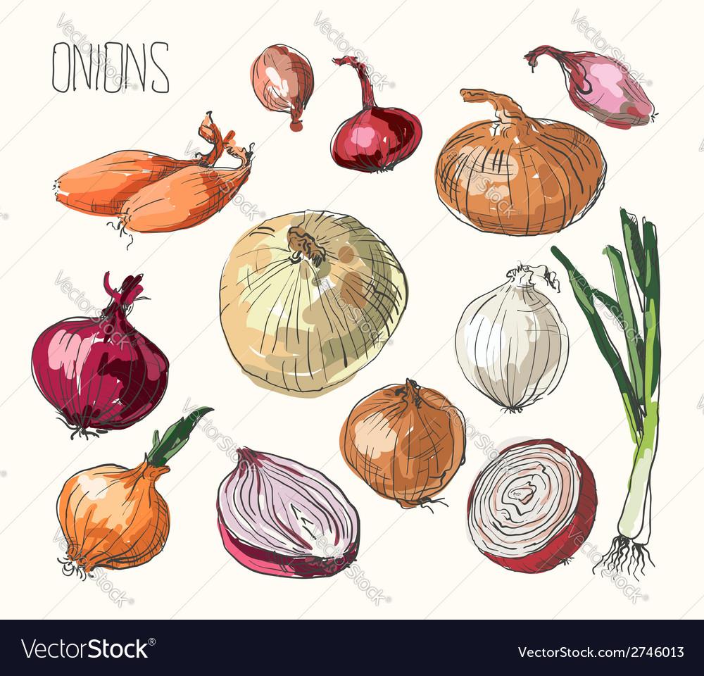 Onion set vector | Price: 1 Credit (USD $1)