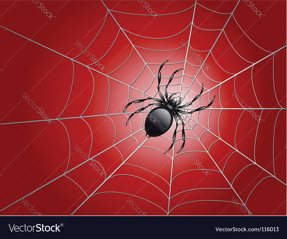 Spider on wed vector | Price: 1 Credit (USD $1)