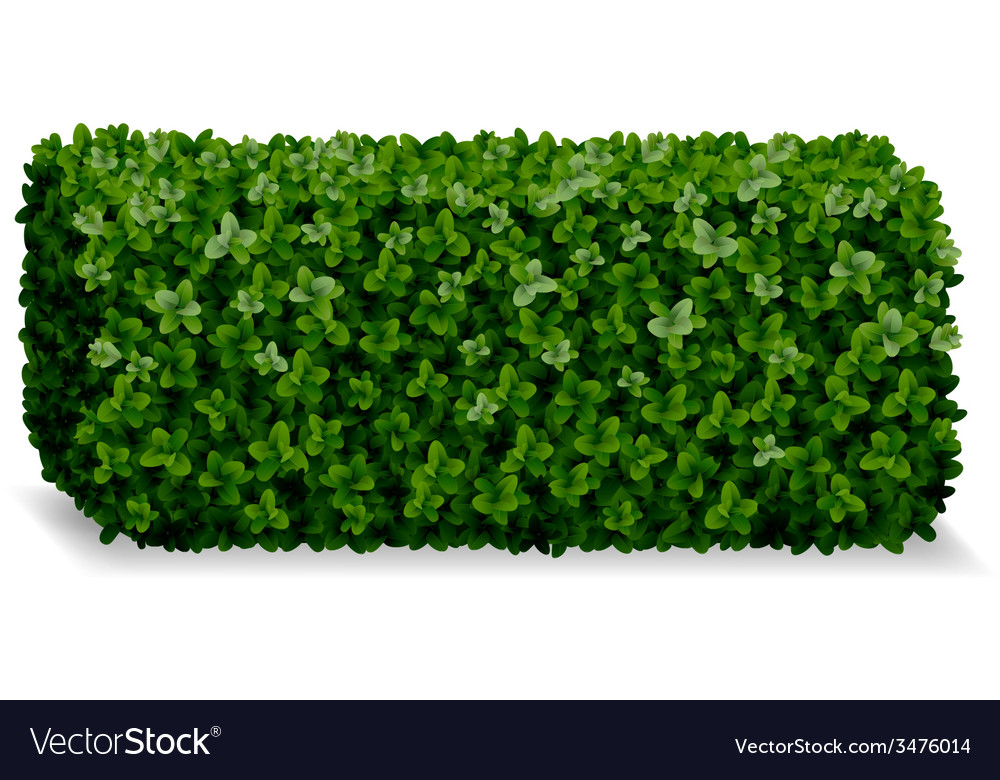 Boxwood decorative fence vector | Price: 3 Credit (USD $3)