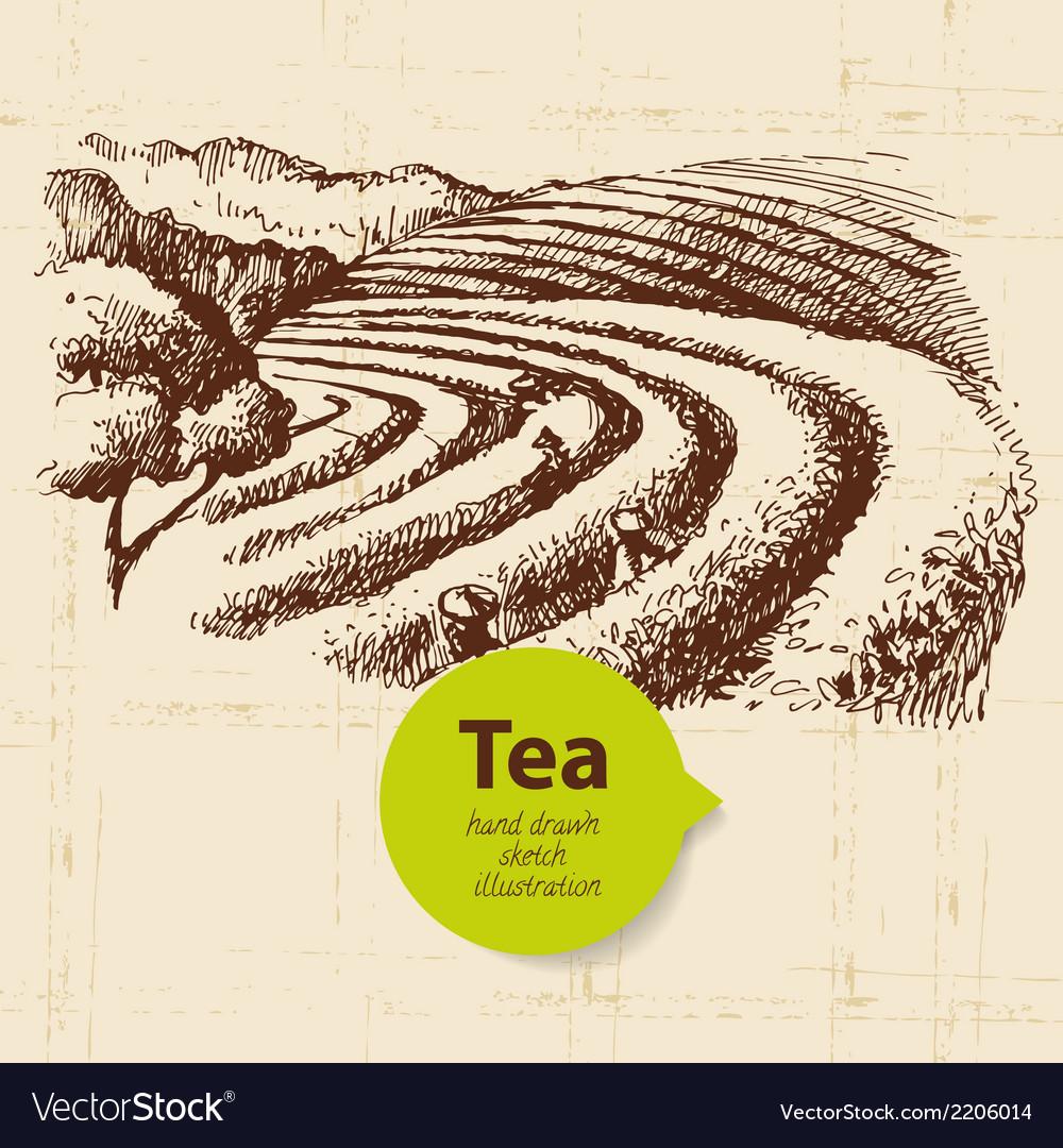 Tea vintage background hand drawn sketch vector   Price: 1 Credit (USD $1)
