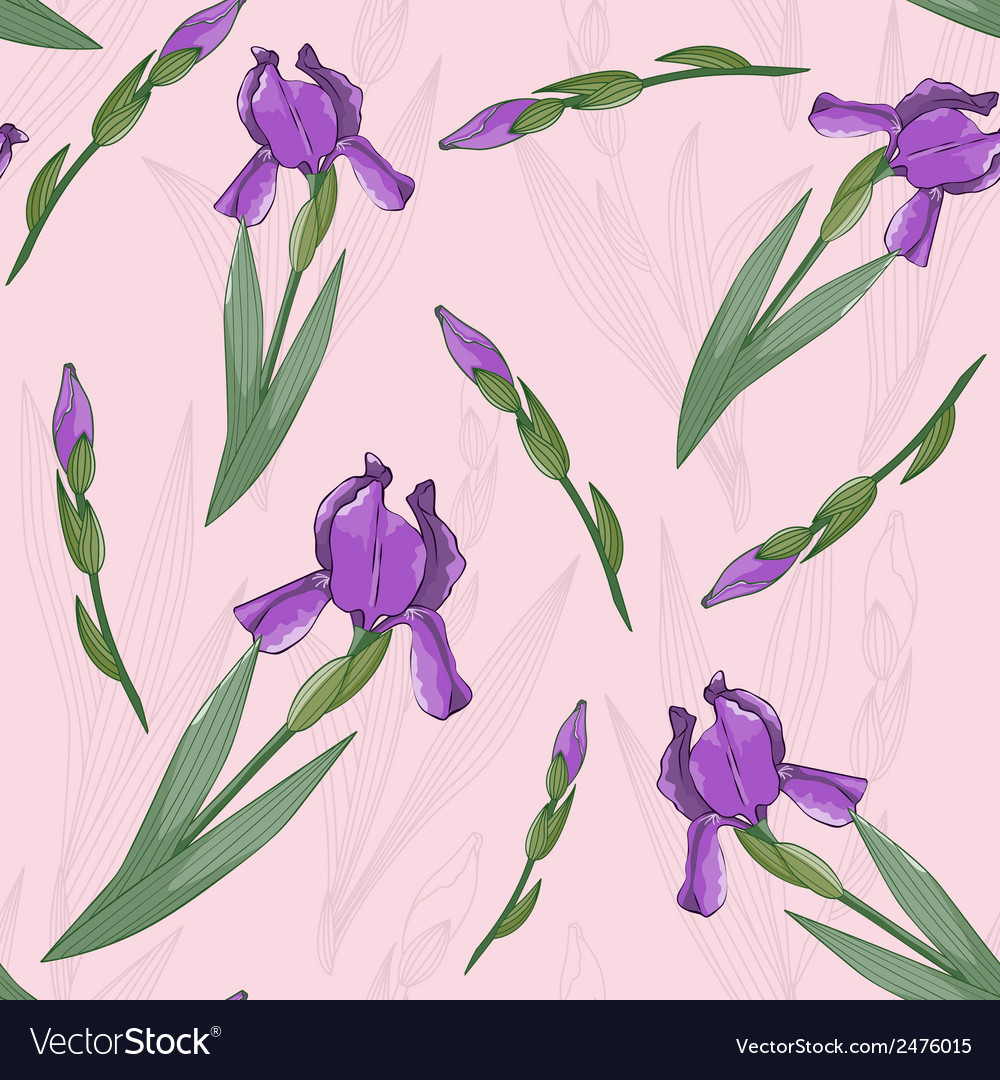 Seamless pattern with irises flowers vector | Price: 1 Credit (USD $1)
