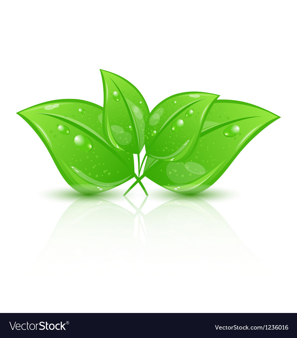 Green eco leaves isolated on white background vector | Price: 1 Credit (USD $1)