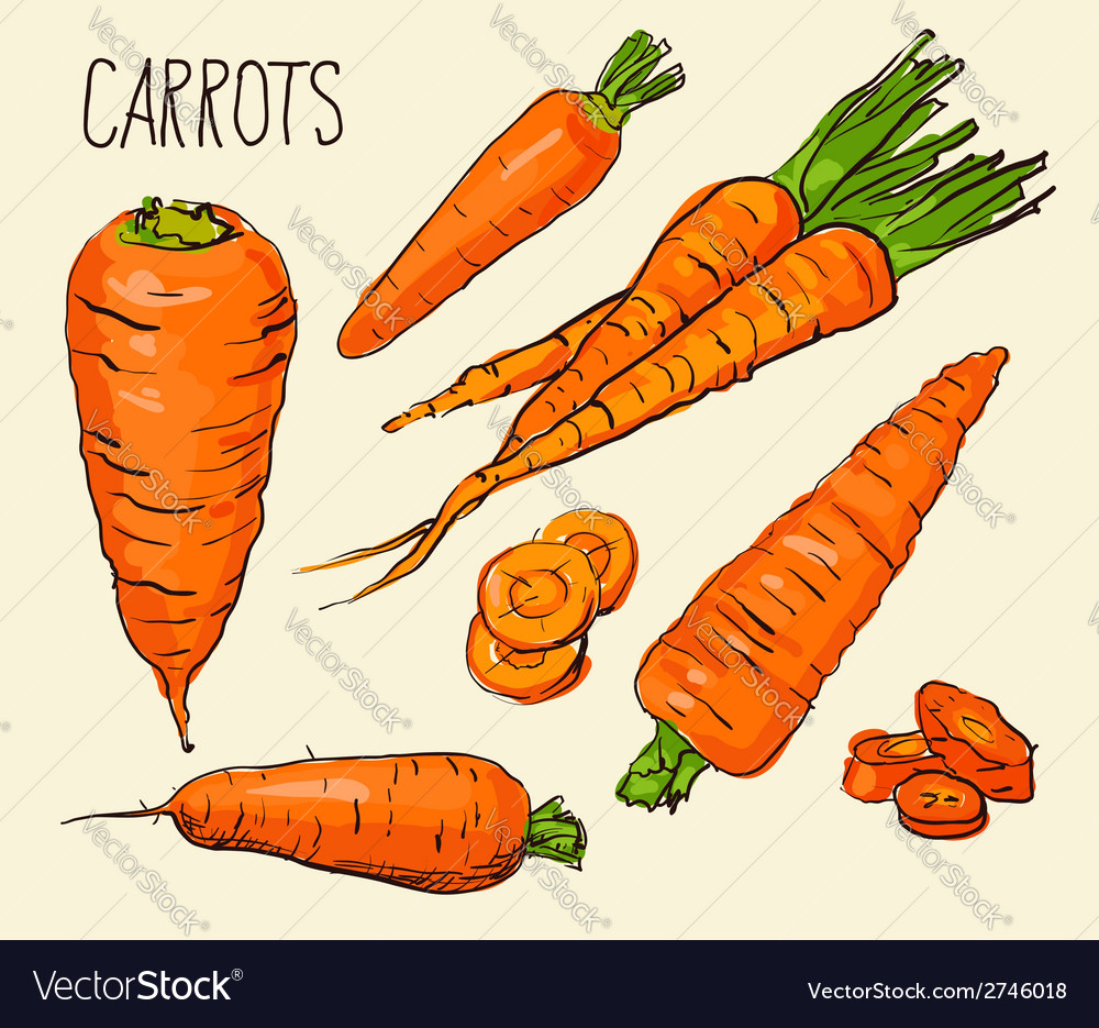 Set carrots isolated on white background vector | Price: 1 Credit (USD $1)