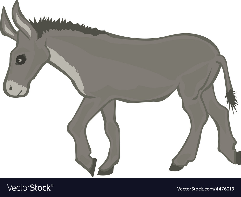 Donkey cartoon vector | Price: 1 Credit (USD $1)