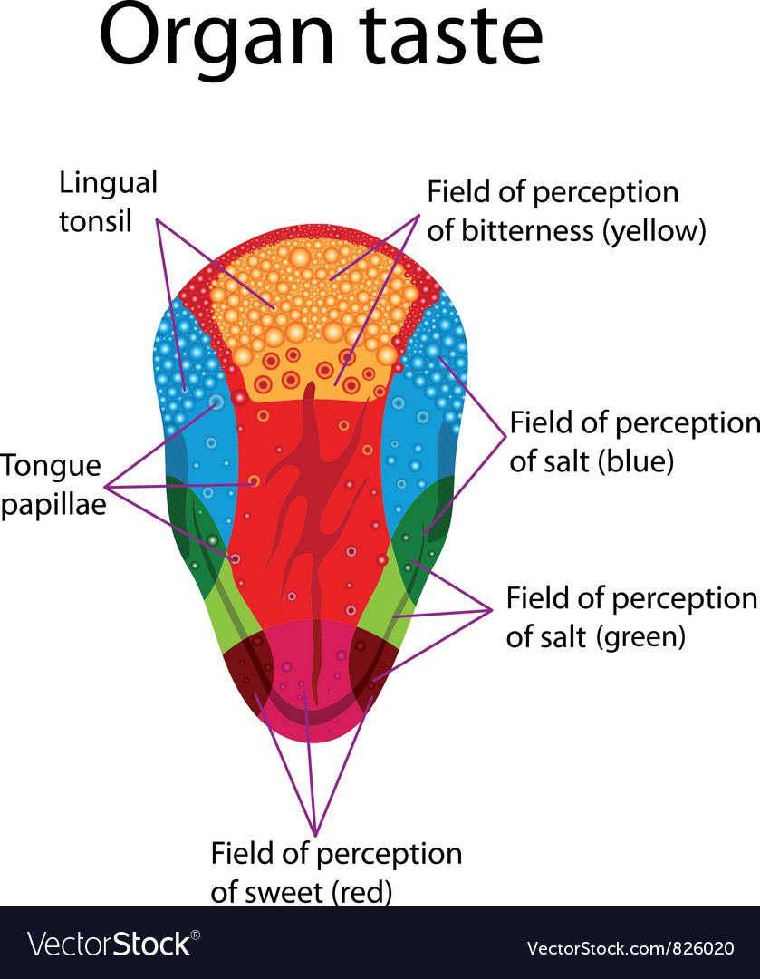 Tongue vector   Price: 1 Credit (USD $1)