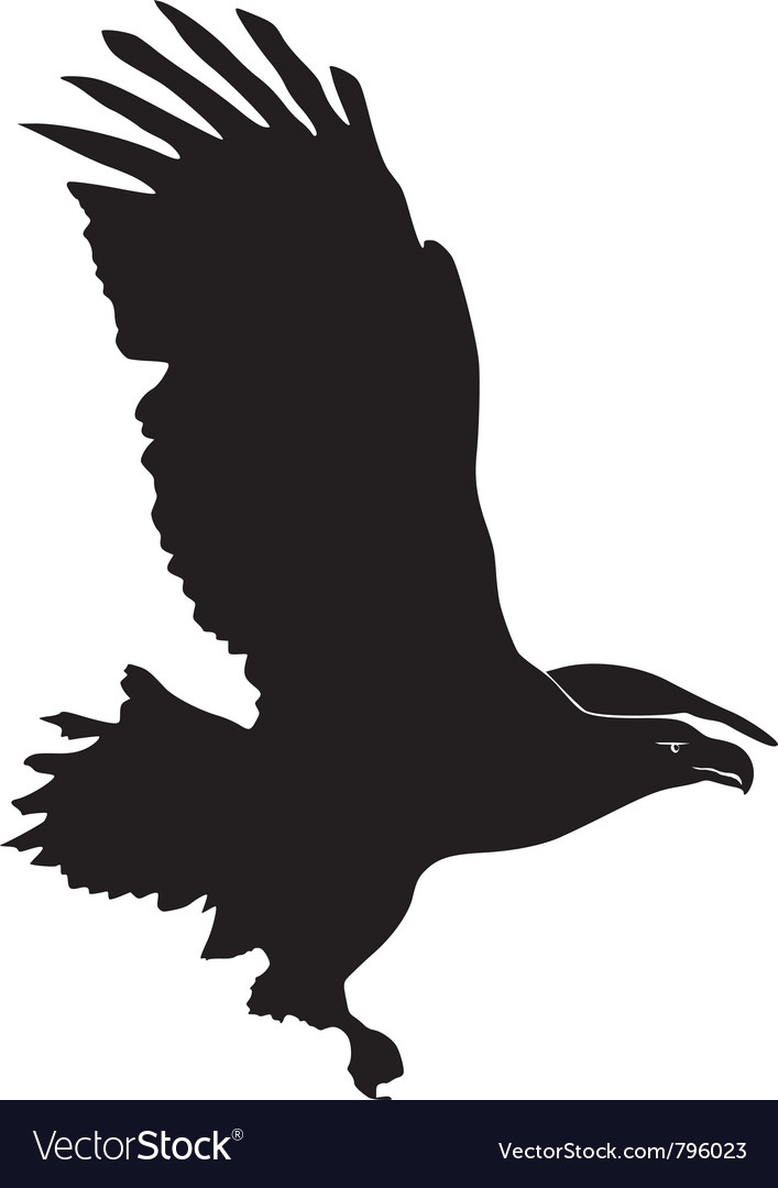 Black silhouette of sea-eagle vector | Price: 1 Credit (USD $1)