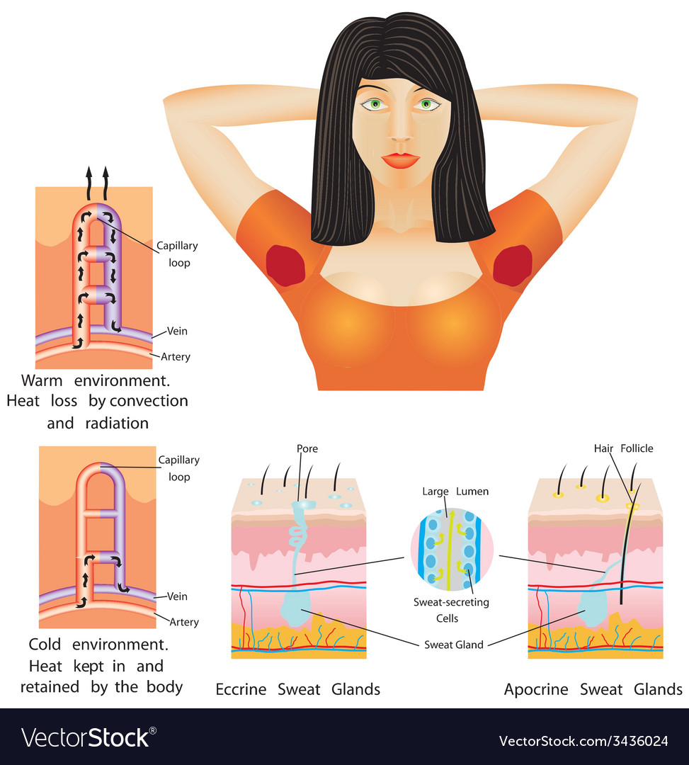 Armpit sweat vector | Price: 1 Credit (USD $1)