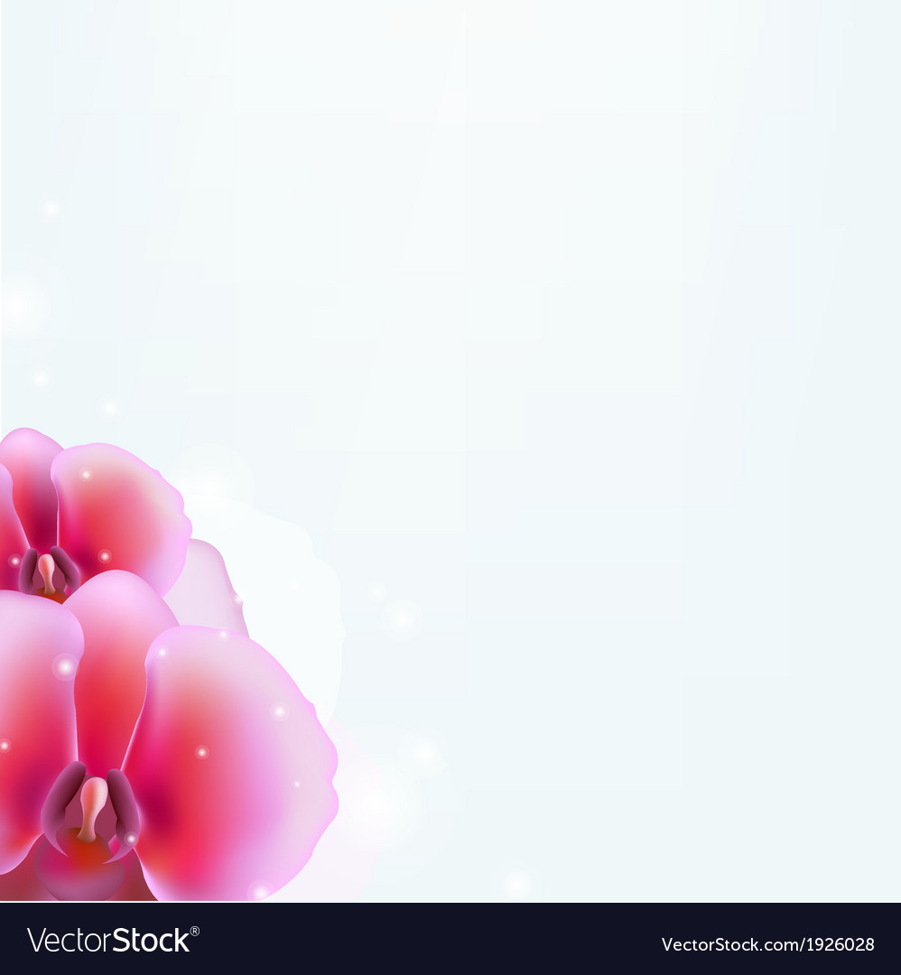 Floral background with orchid vector | Price: 1 Credit (USD $1)