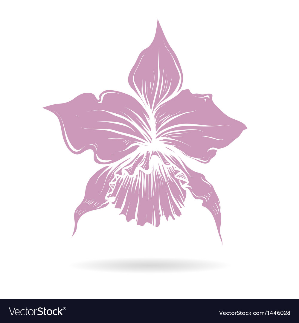 Hand drawn lilly flower purple vector | Price: 1 Credit (USD $1)