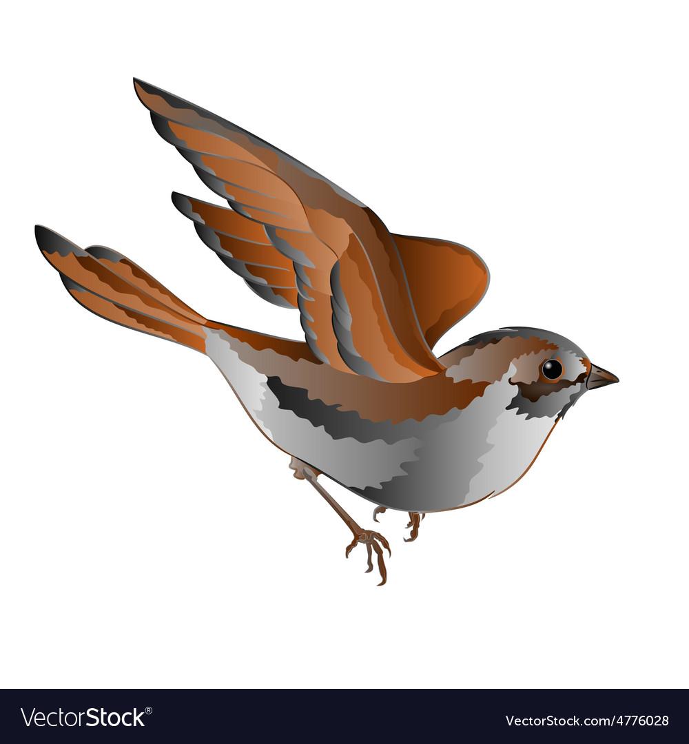 Little bird cub sparrow passer domesticus in flig vector | Price: 1 Credit (USD $1)