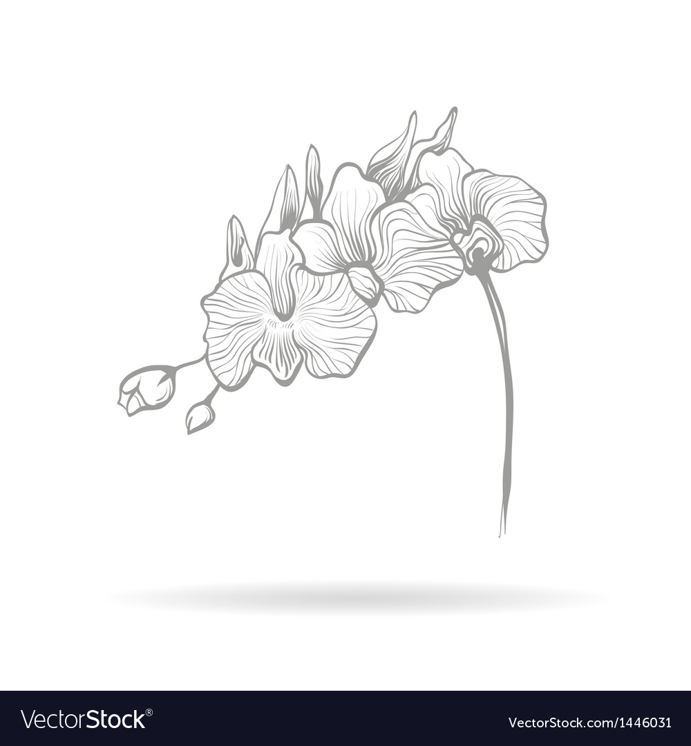 Hand drawn orchid flower vector | Price: 1 Credit (USD $1)