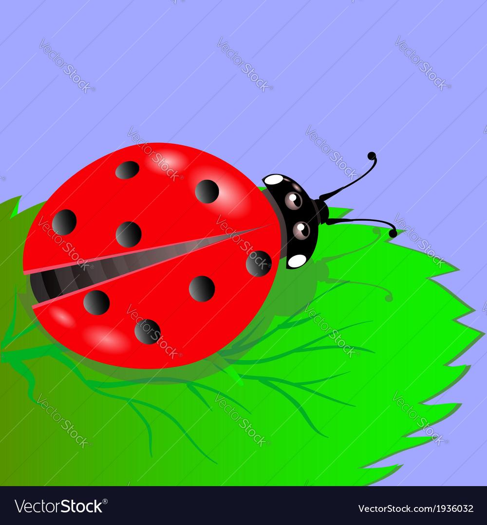 Ladybird vector | Price: 1 Credit (USD $1)