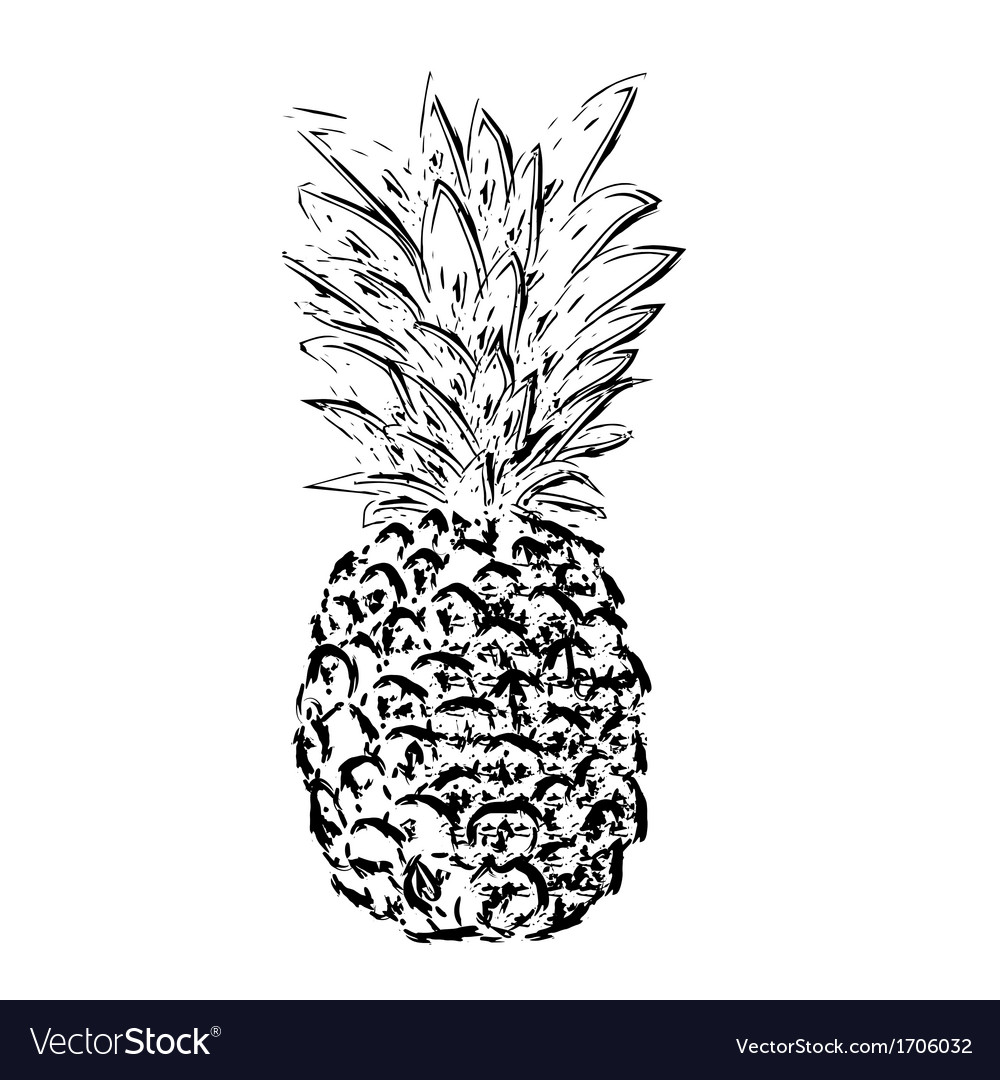 Pibapple sketch vector | Price: 1 Credit (USD $1)