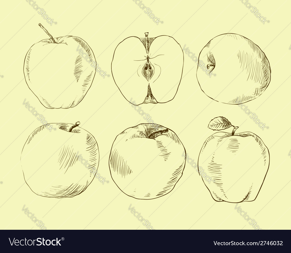Set of highly detailed hand drawn apples vector | Price: 1 Credit (USD $1)