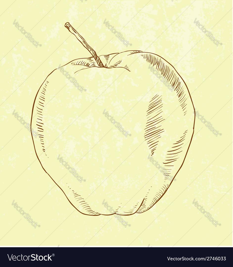 Hand drawn apple vector | Price: 1 Credit (USD $1)