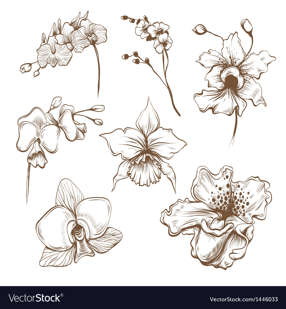 Hand drawn orchid flower set vector | Price: 1 Credit (USD $1)