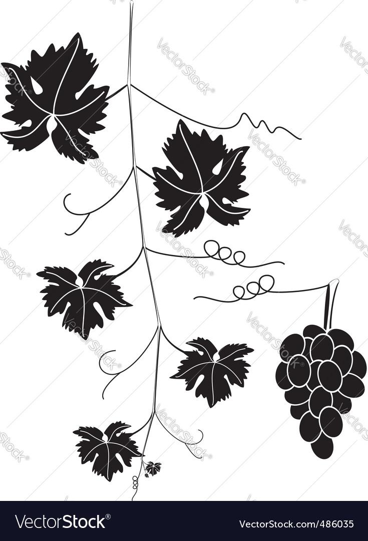 Grape vine vector | Price: 1 Credit (USD $1)