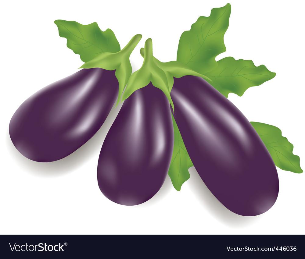 Eggplants vector | Price: 1 Credit (USD $1)