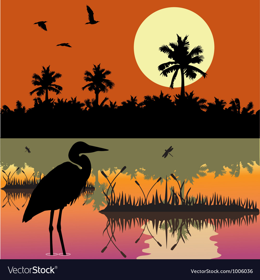 Everglades vector | Price: 1 Credit (USD $1)