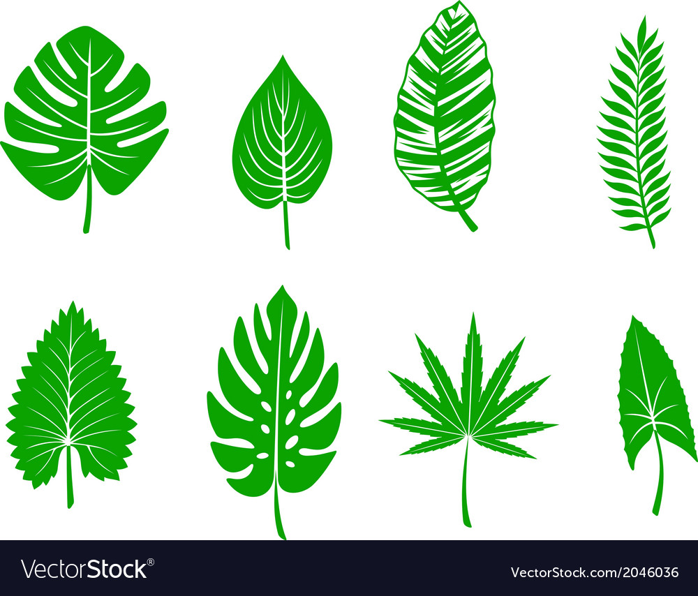Green tropical leaves vector | Price: 1 Credit (USD $1)