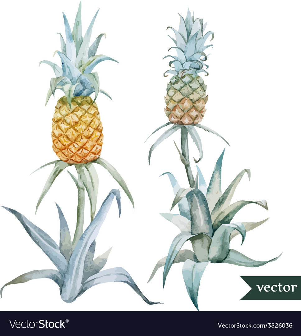 Watercolor tropical pineapple exotic pattern vector   Price: 1 Credit (USD $1)