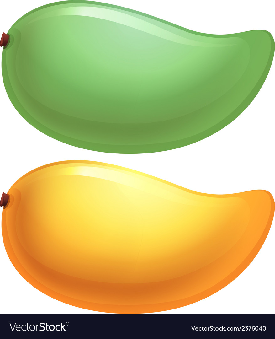 A green and a yellow mango vector | Price: 1 Credit (USD $1)