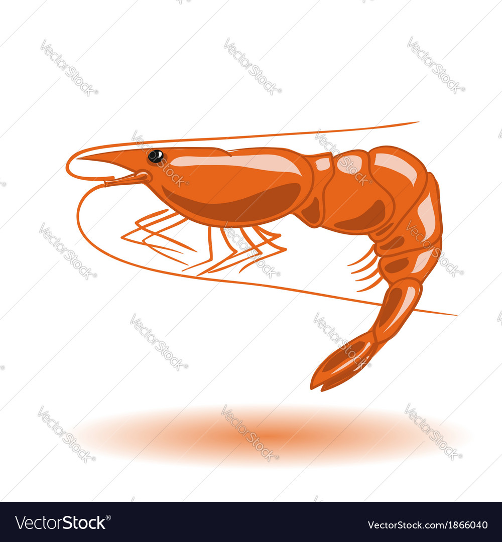 Orange shrimp vector | Price: 1 Credit (USD $1)