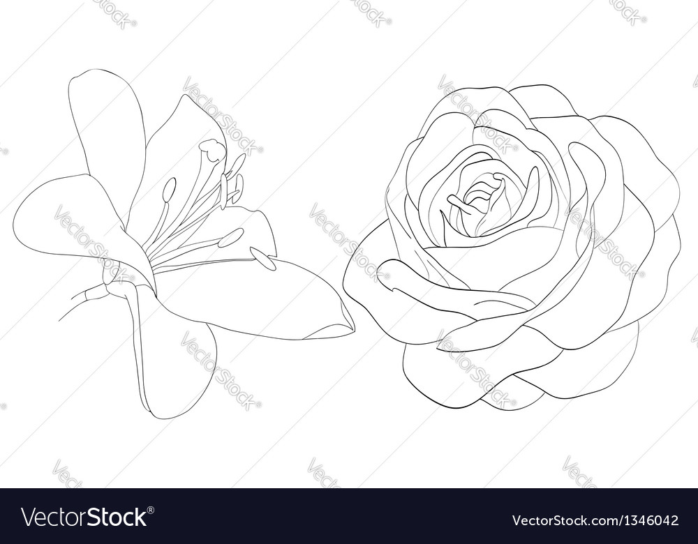 Set of shape roses and lilies isolated on white vector | Price: 1 Credit (USD $1)