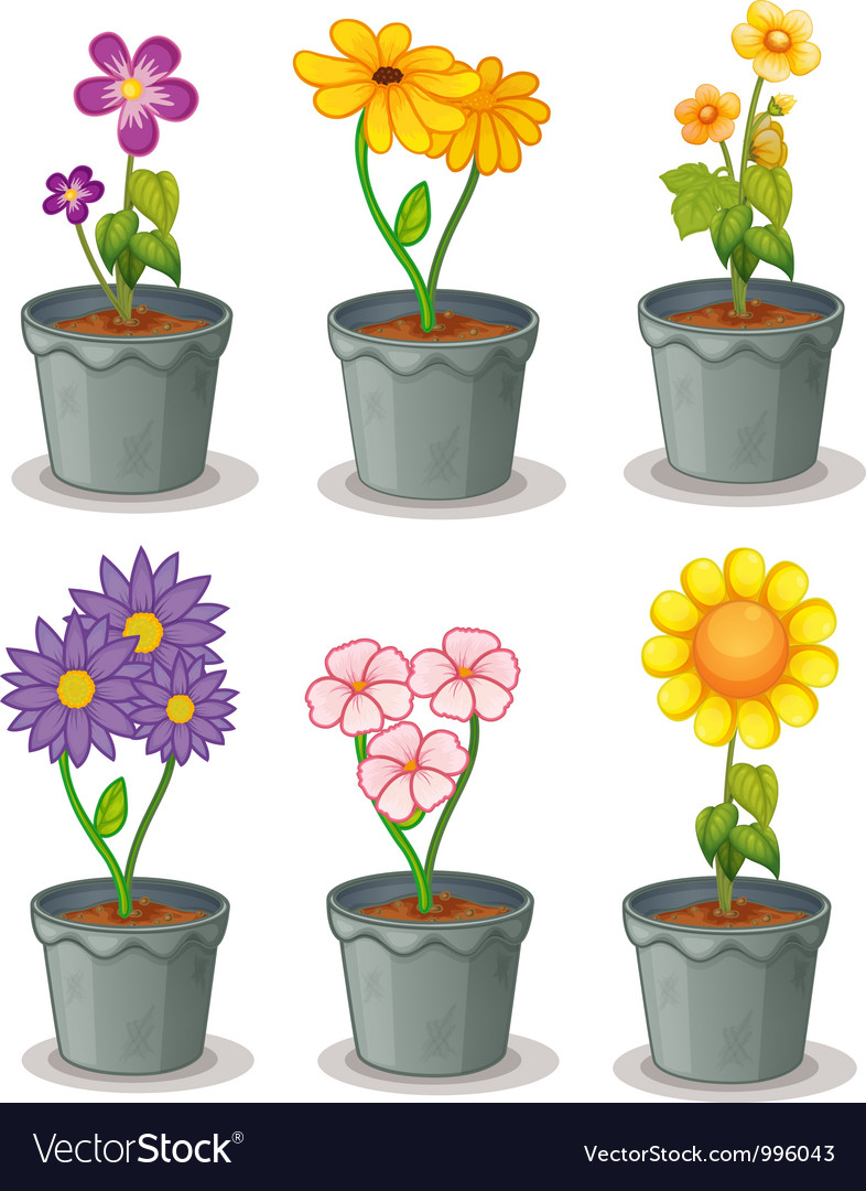 Pot plants vector | Price: 1 Credit (USD $1)