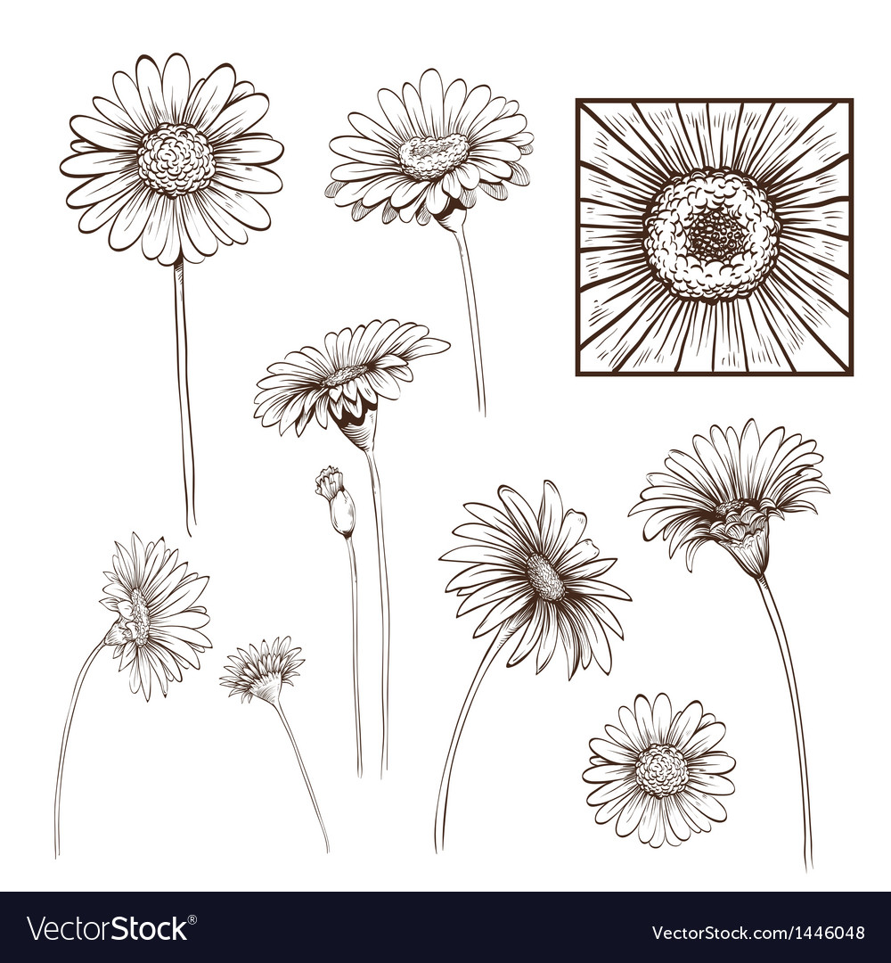 Hand drawn gerber flower set vector | Price: 1 Credit (USD $1)