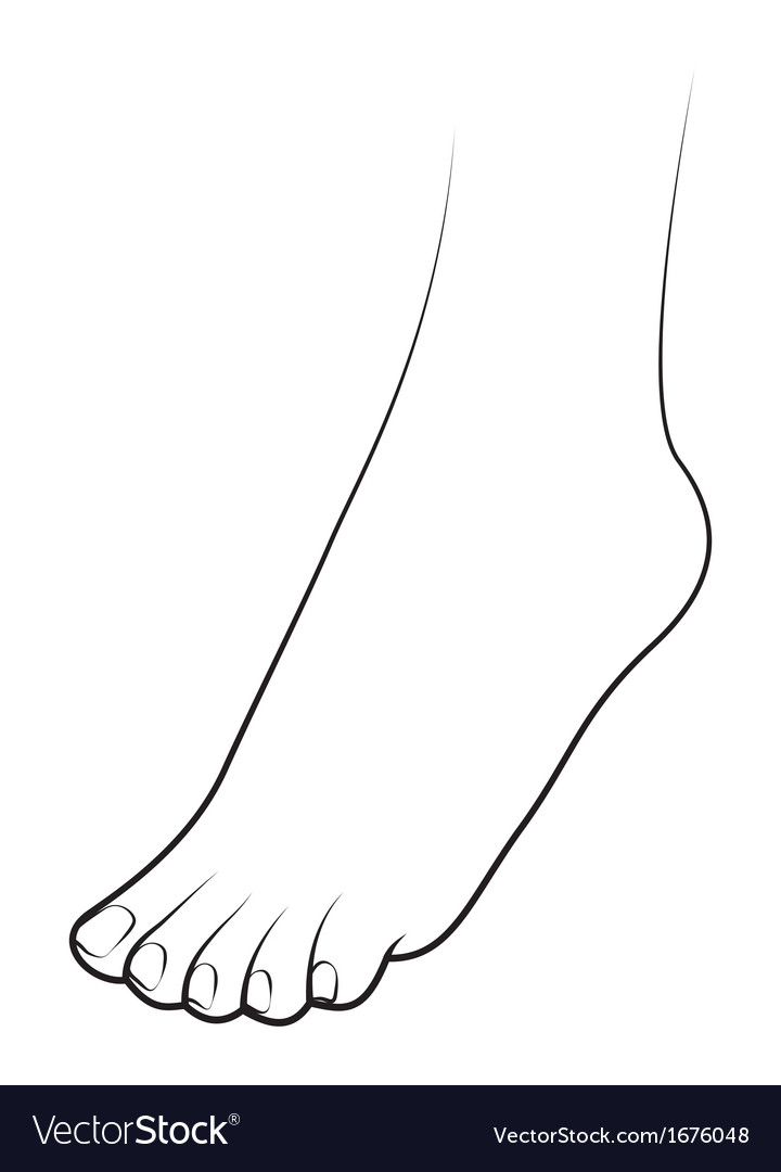 Human foot on white background vector | Price: 1 Credit (USD $1)