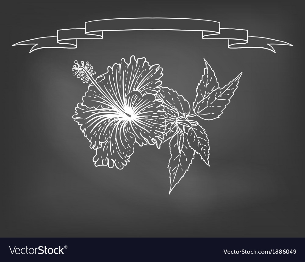 Card with hibiscus flower on chalkboard vector | Price: 1 Credit (USD $1)