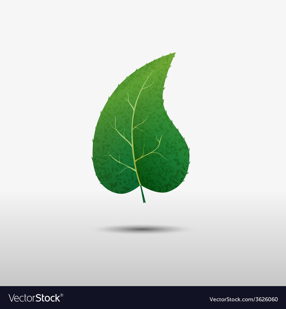 Green leaf of the tree icon vector   Price: 1 Credit (USD $1)