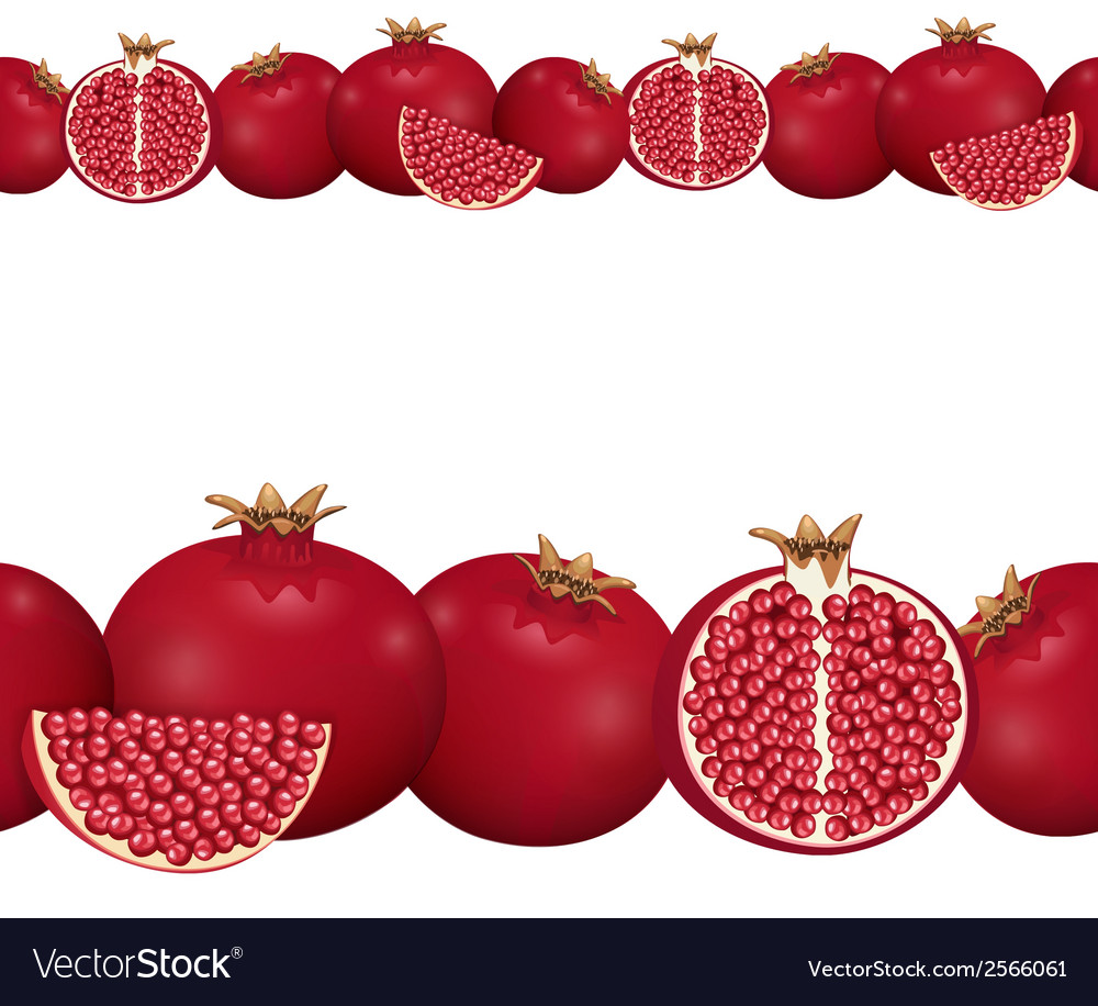 Seamless border of pomegranate vector | Price: 1 Credit (USD $1)