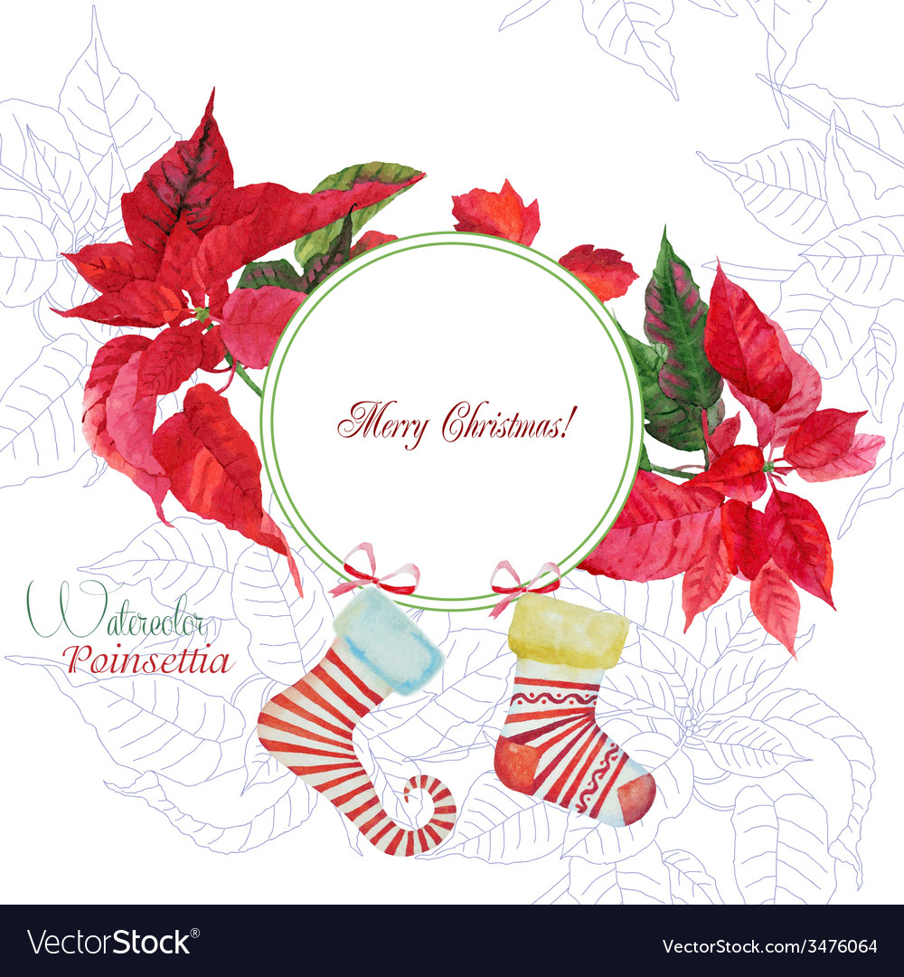 Background with bouquet of poinsettia and sock vector | Price: 1 Credit (USD $1)