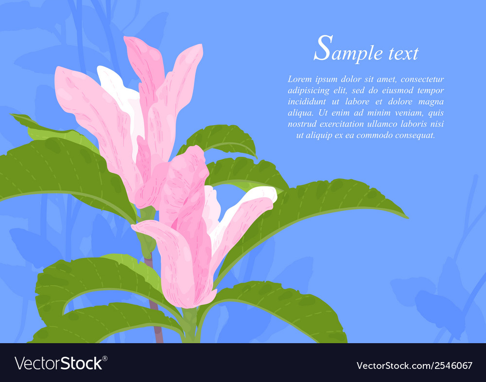 Magnolia flowers vector | Price: 1 Credit (USD $1)
