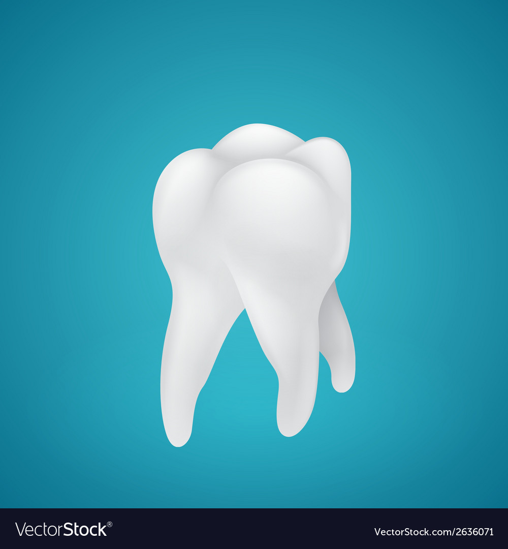 Healthy human teeth vector | Price: 1 Credit (USD $1)