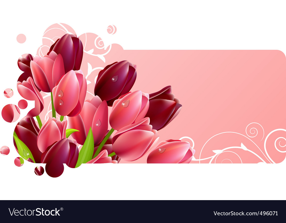 Tulip flowers vector | Price: 3 Credit (USD $3)