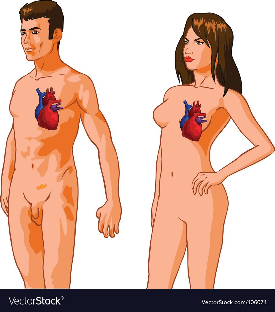 Heart figure vector | Price: 1 Credit (USD $1)