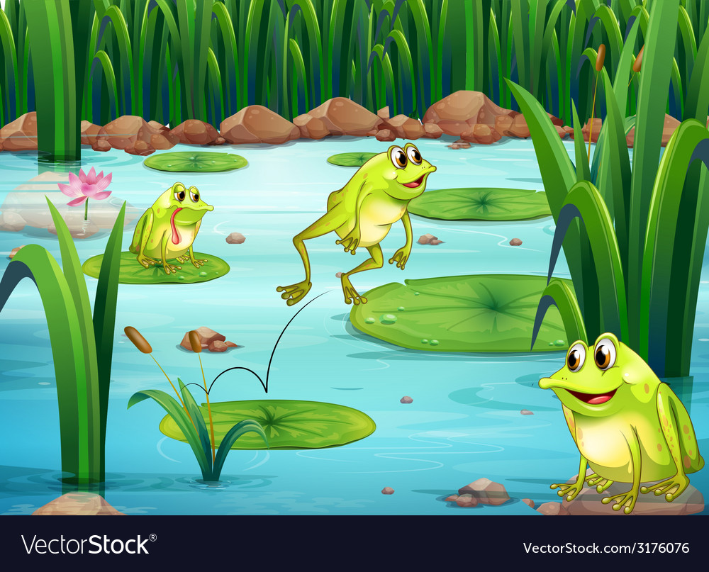 Frogs vector | Price: 3 Credit (USD $3)