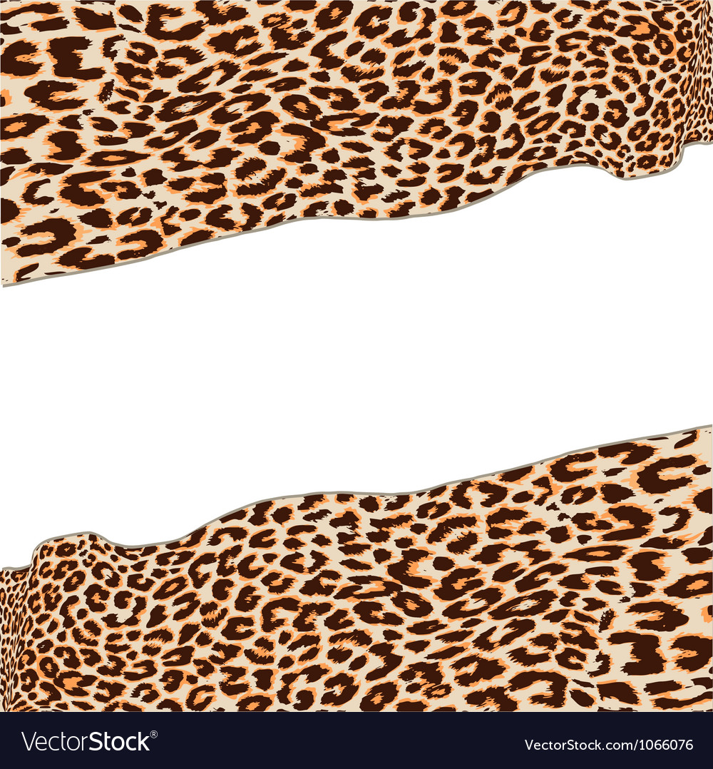 Leopard texture vector | Price: 1 Credit (USD $1)