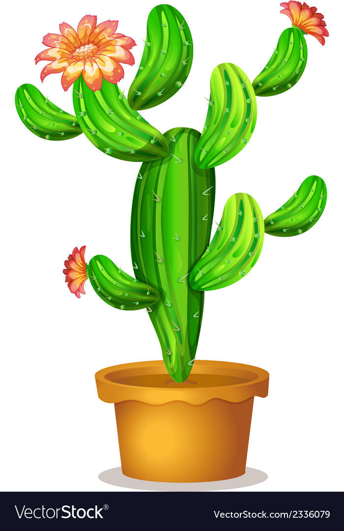 A cactus plant with flowers vector | Price: 1 Credit (USD $1)