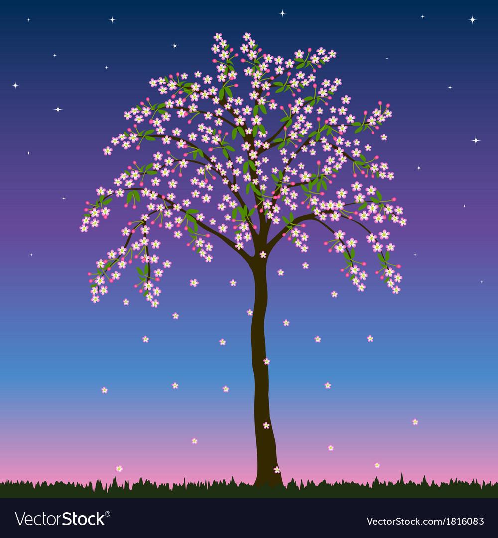 Blossom tree vector   Price: 1 Credit (USD $1)
