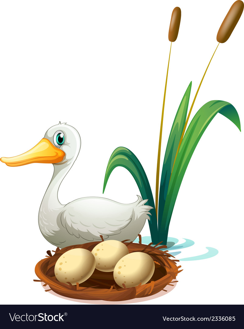 A duck beside the nest vector | Price: 1 Credit (USD $1)