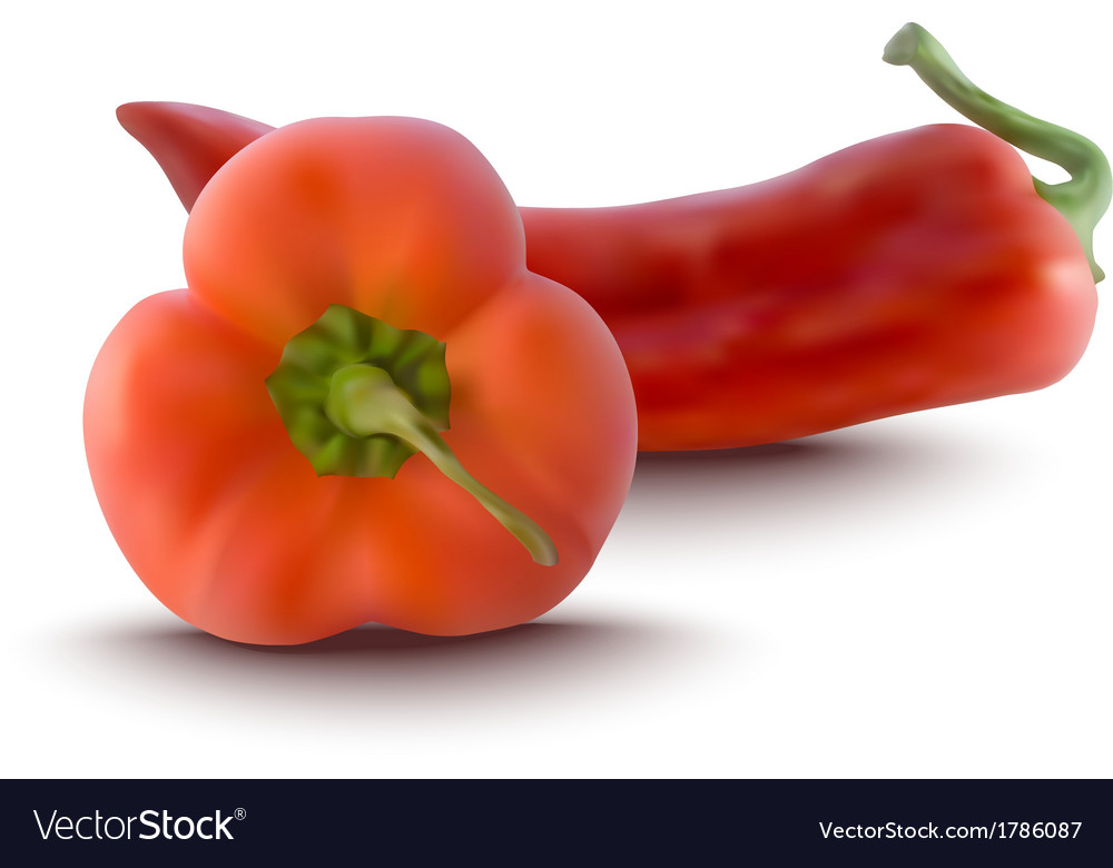 Red peppers vector | Price: 1 Credit (USD $1)