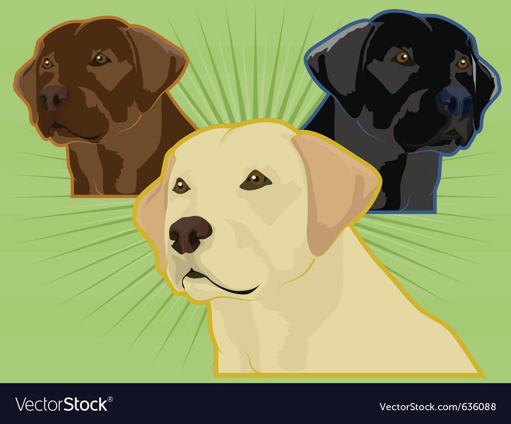 Labrador retrievers vector | Price: 1 Credit (USD $1)
