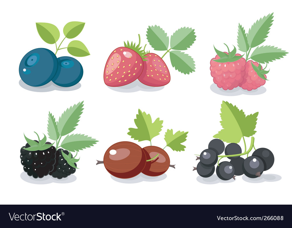 Summer berry set vector | Price: 3 Credit (USD $3)