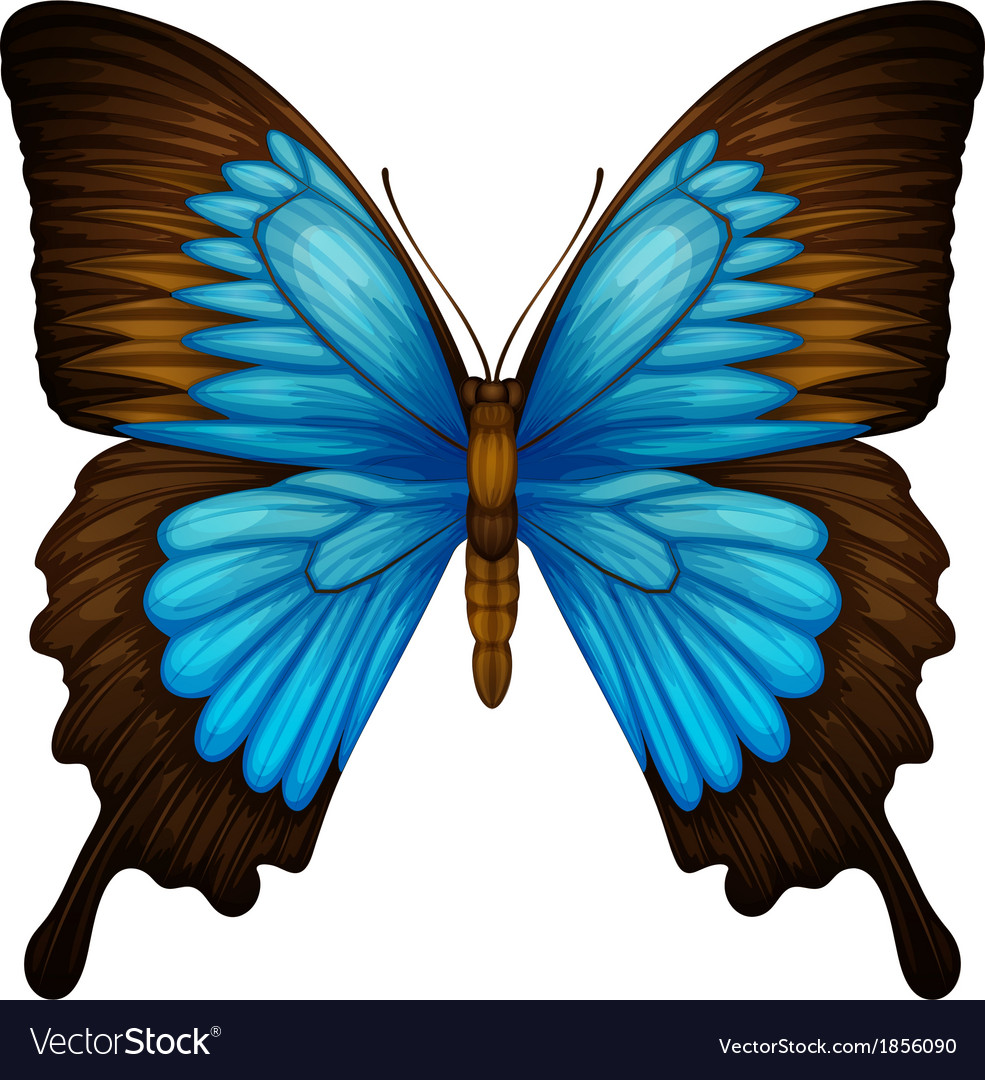 Blue mountain swallowtail vector | Price: 1 Credit (USD $1)